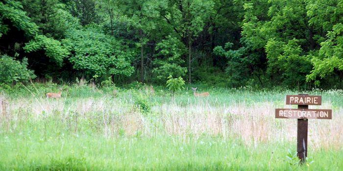 Deer grazing in the prairie restoration area at the Metta Meditation Center