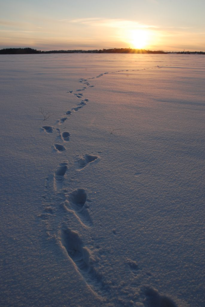 Mindful footsteps across Lake Elysian